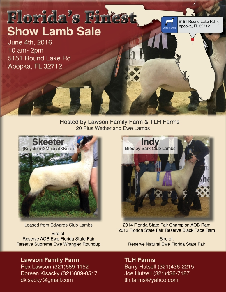 Flyer I designed for a show lamb sale in Florida.